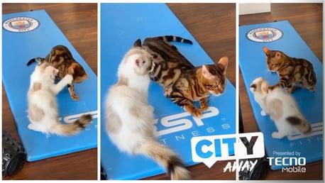 City Away #10: Le tigre de Manchester City