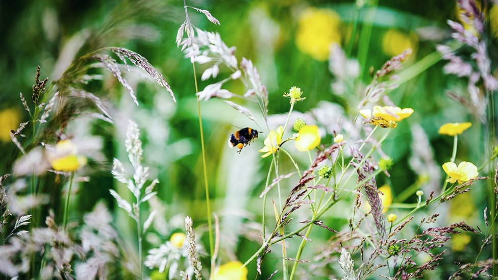 WE'RE ALL CITY : Another bee finds itself at home!